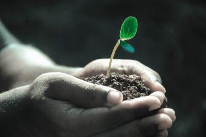 Truthseekers SCCOC planting